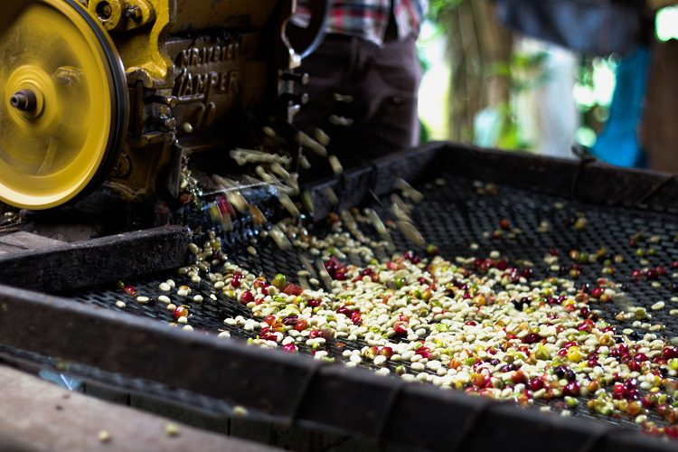 How Coffee Is Processed